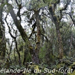 w-19-YPH-Panorama-foret