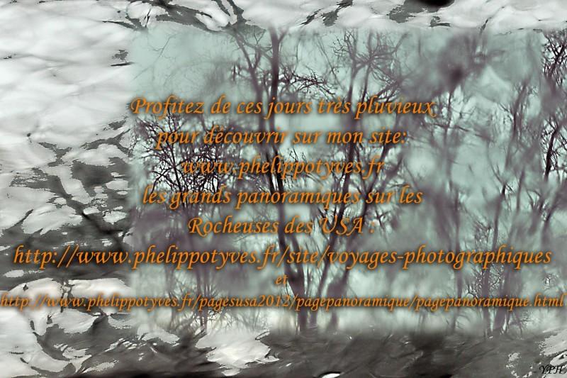 YPH-2013-04-10-arbres-01-w
