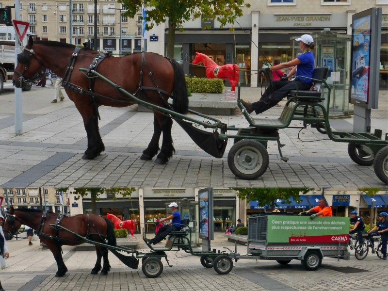 YPH-2014-09-02-2-chevaux-w