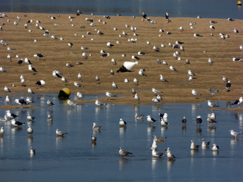 YPH-2014-09-09-mouettes-w