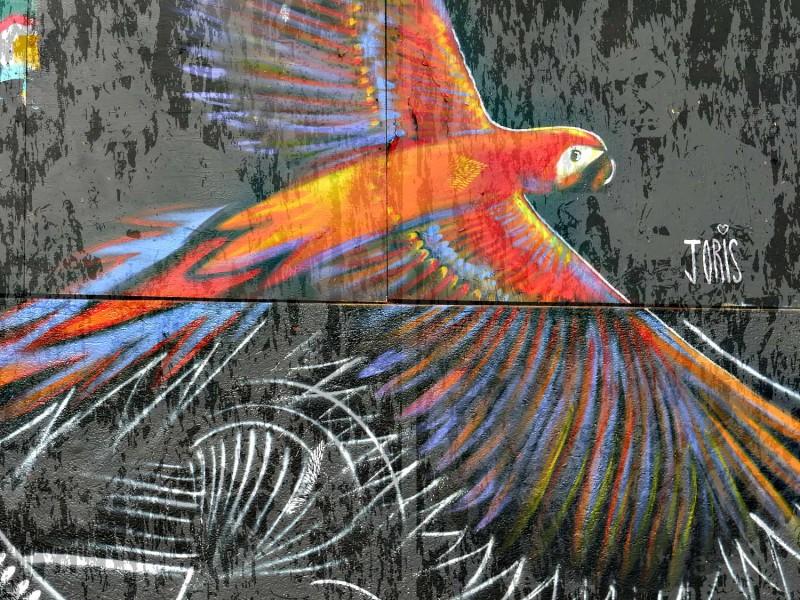 YPH-2015-05-14-oiseau