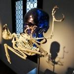 148-DSC07343+Jan-Fabre.-Glass-and-Bone-Sculptures-1977-2017